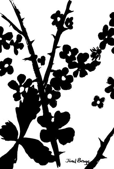 Janel Bragg - Blackberry Bush