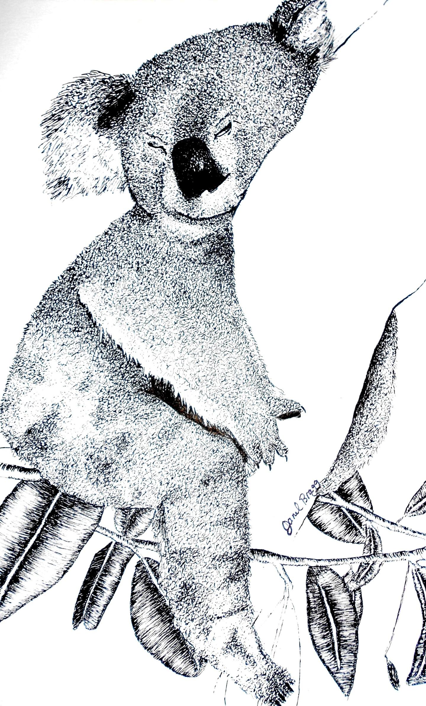 Janel Bragg - Sleeping Koala