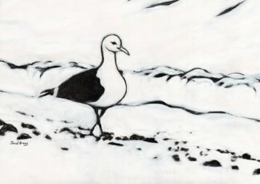 Seagull from Washington Park