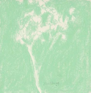 Baby's Breath in Tender Green