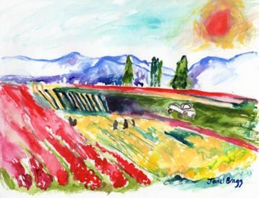 Skagit Valley Tulip Fields Colorful Version